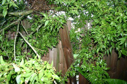 Treeonfence
