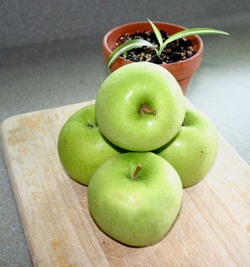 Greenapples_copy